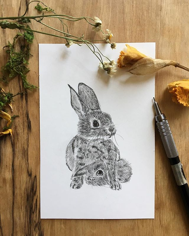 """~ small 4""""x6"""" graphite drawing of a mama bunny & her baby. i'll have lots of small drawings and paintings of mama animals & their babies available for Mother's Day during my next shop update on May 4th 🐇🐇🐇 ~ ~ ~  #animalpower #illustration #artistsoninstagram #art #artwork #naturelover #motherearth #natureart #womenwhodraw #blackartist #bunnies #graphite"""