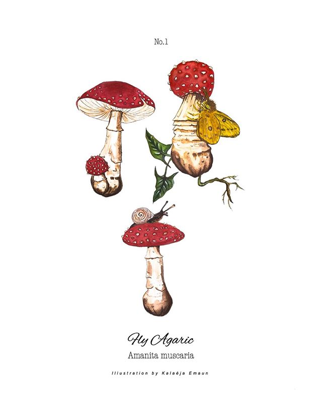 "𓁼⁣ ⁣ Amanita muscaria 8x10"" Giclee prints of my 3 different mushroom illustrations combined. Printed on Cotton Rag. They will be available today during my shop update at 6pm pacific time. I love these so much 🍄🍄🍄⁣ *The second photo doesn't have the ""illustrated by Kalaéja Emaun"" on the last line but that's a mistake as they will all be printed exactly like the first photo! xx ____⁣ ⁣ ⁣⁣⁣ #watercolor_daily #watercolorist #watercolorlove #dailydoseofpaper #visualstorytelling #createexplore #californiaartist #womenwhodraw #blackartist #artistsoninstagram #bedeeplyrooted #enjoythejourney #art #modernoutdoors #amanitamuscaria #magicmushrooms #psychedelics #livefolk⁣ #mycology #illustrator #artistsoninstagram #womenwhodraw #blackartists"