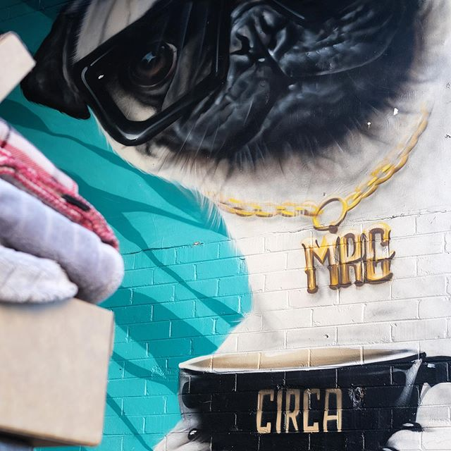 // a pug and some warm blankets to start the week // #circaespresso