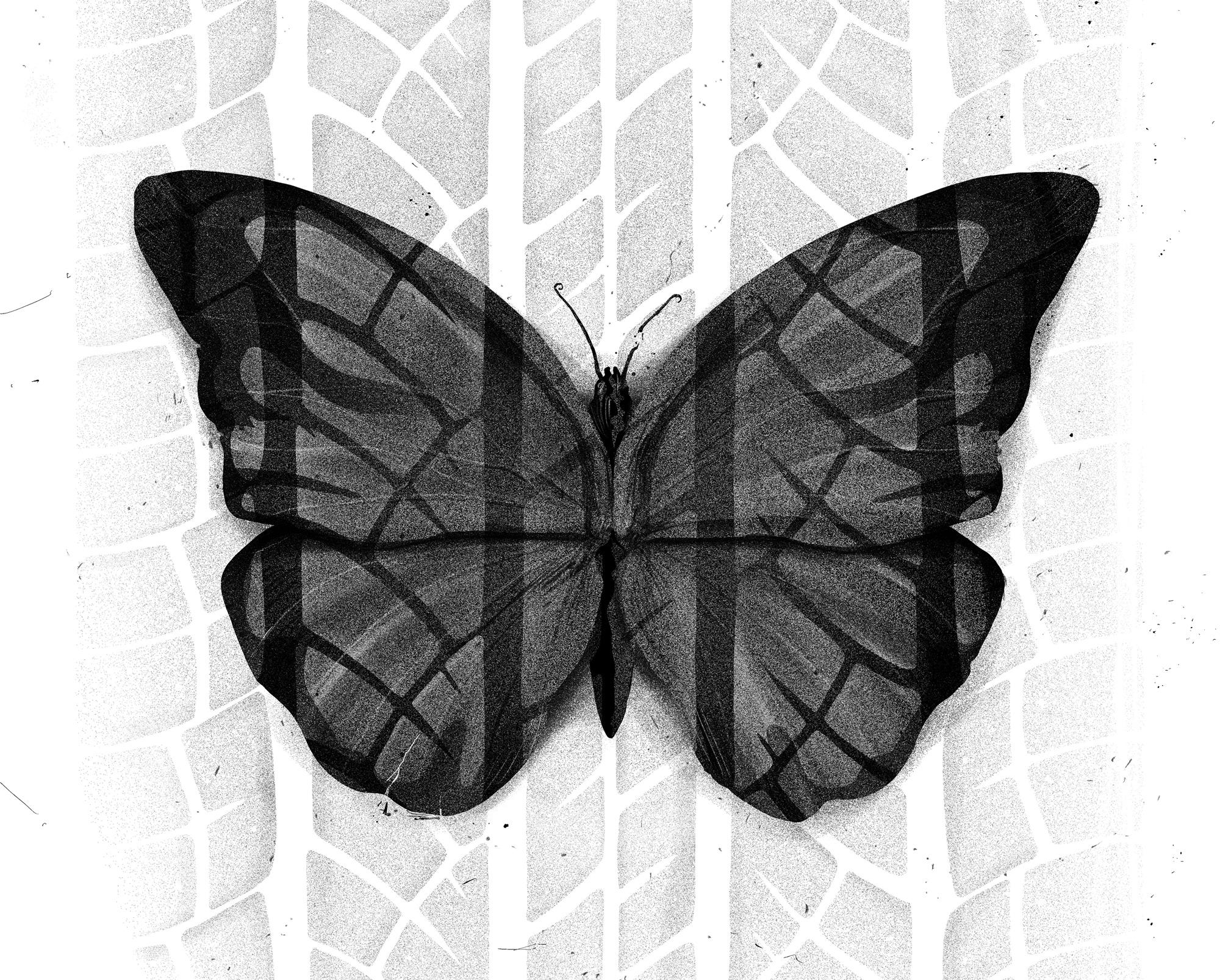 Psykologi-butterfly.jpg