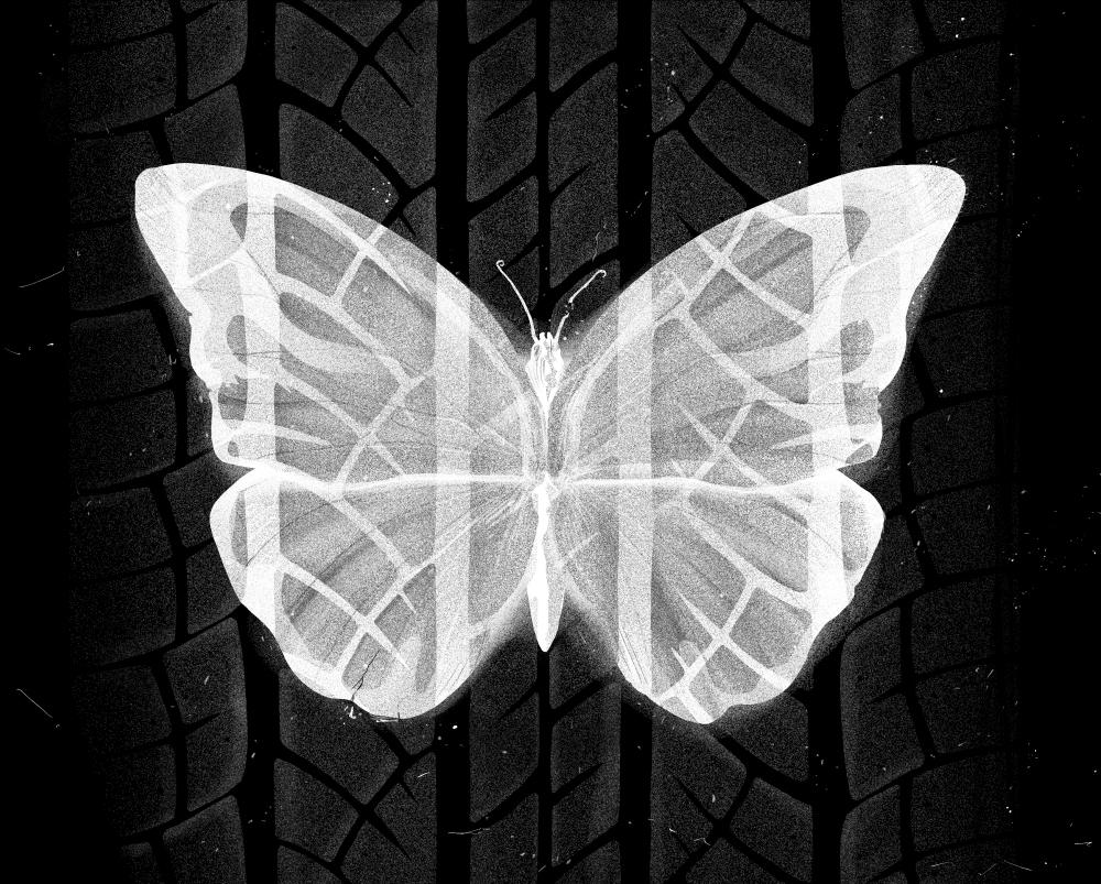 Psykologi-butterfly 2.jpg