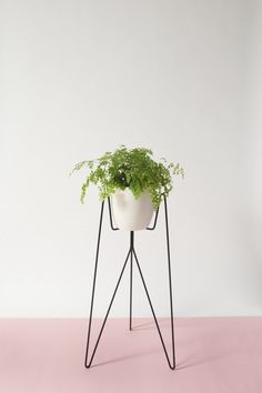 Bujnie – a coleção apresenta diversos suportes para vasos, de parede e de piso, todos muito delicados.