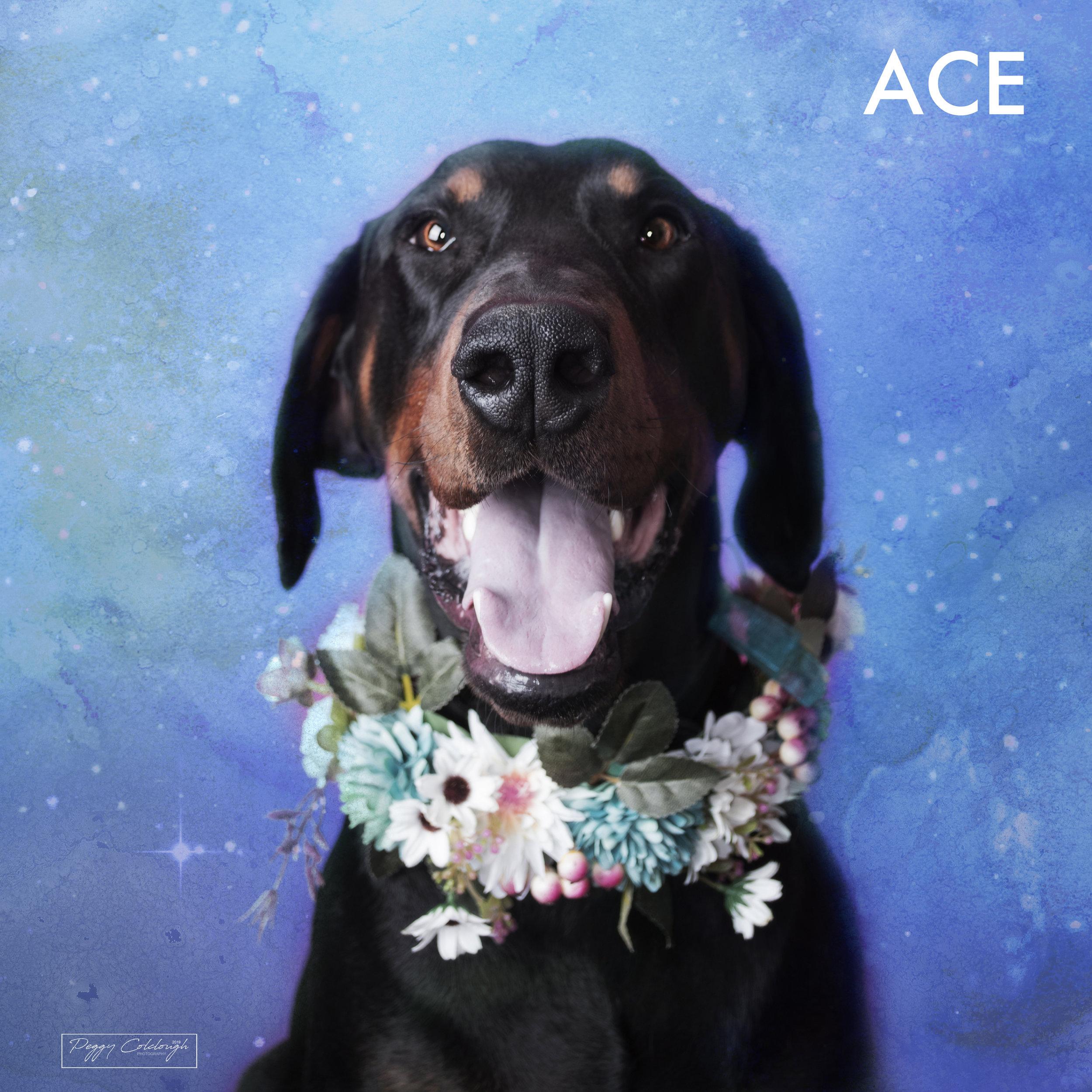 16. Ace.jpg