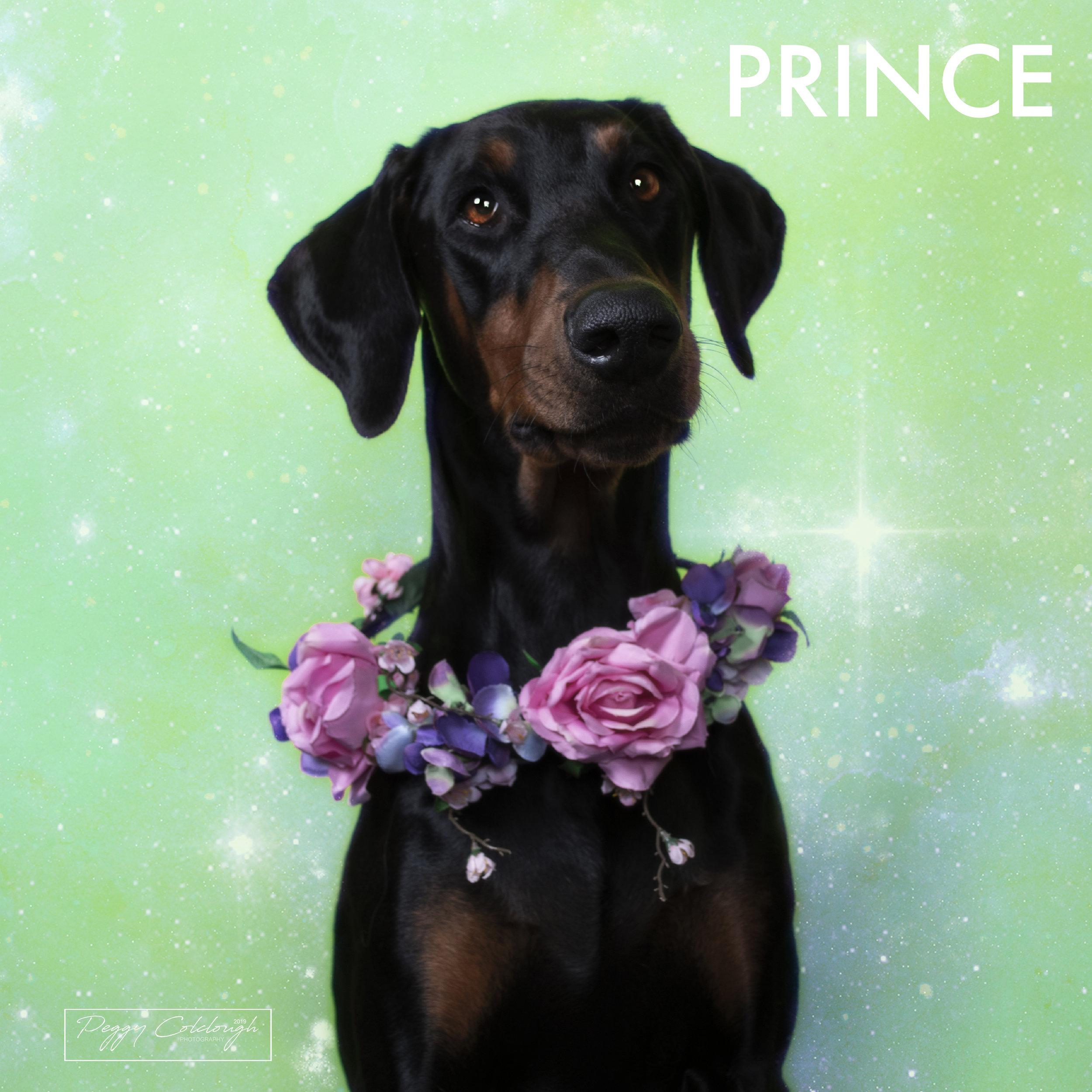 30. PRINCE.jpg