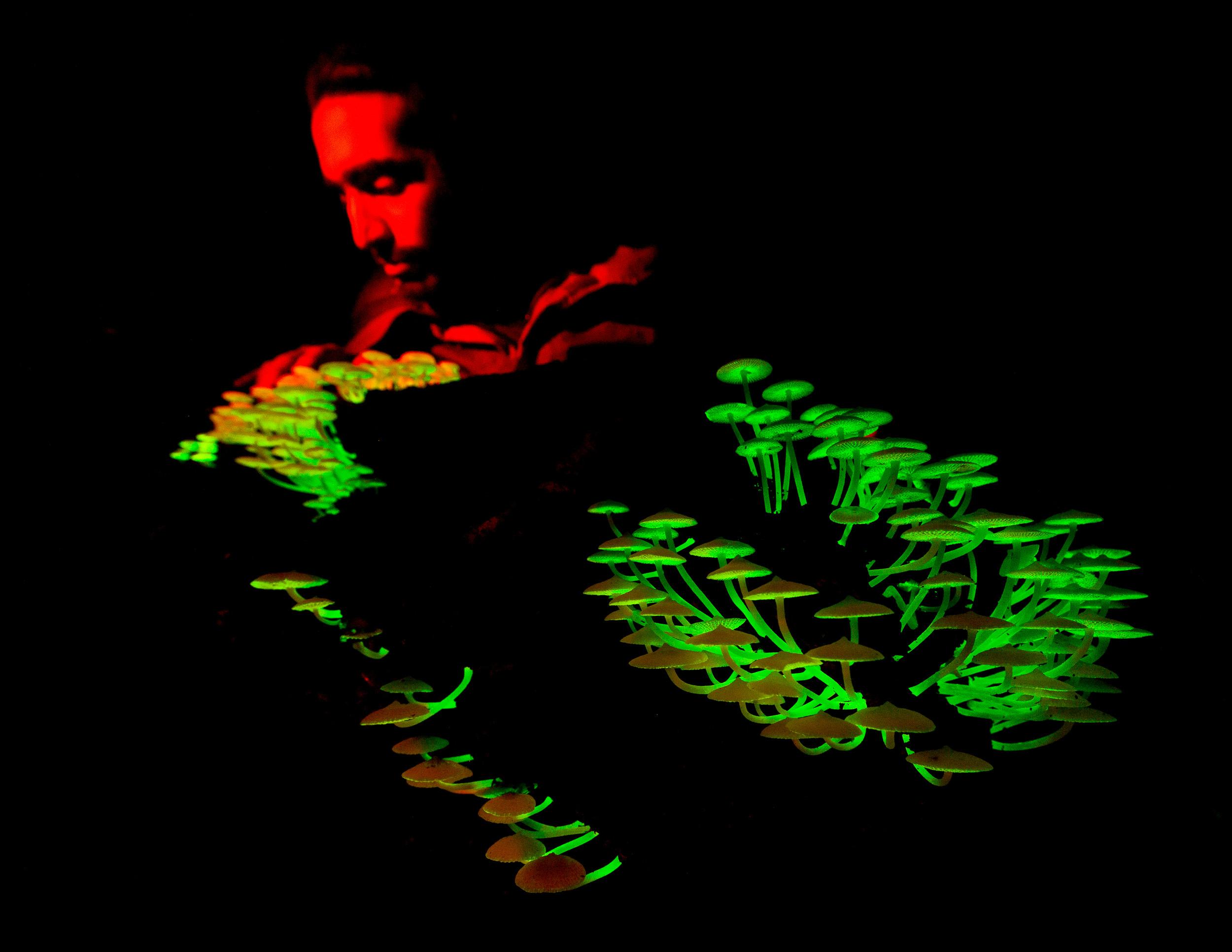 Mycologist Luis Morgado studies a  Filoboletus  fungus that glows in the dark in the Crocker Range, Borneo