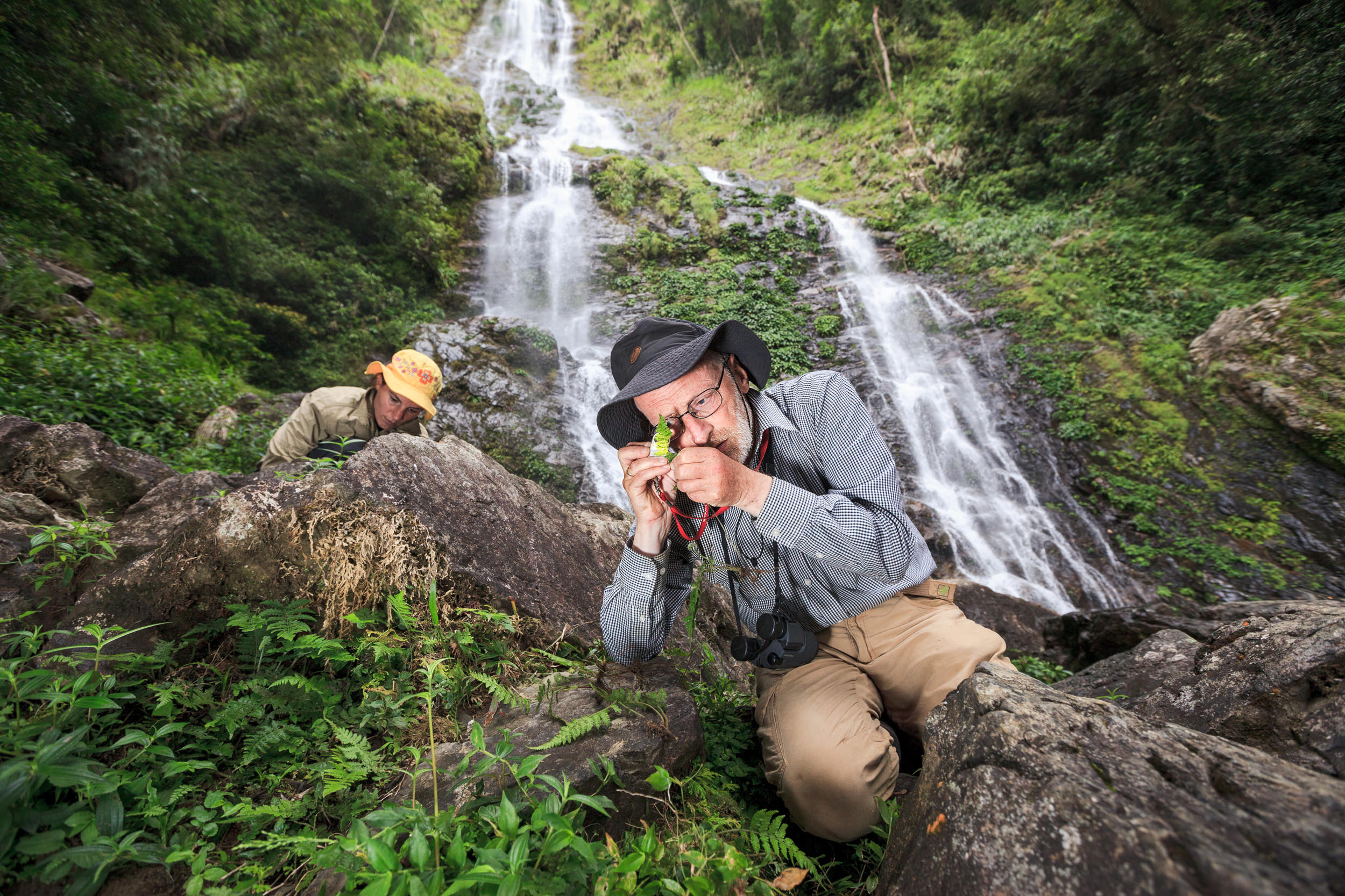 Botanist Peter Hovenkamp studies a fern at the base of the Langanan waterfall on Mount Kinabalu, Borneo