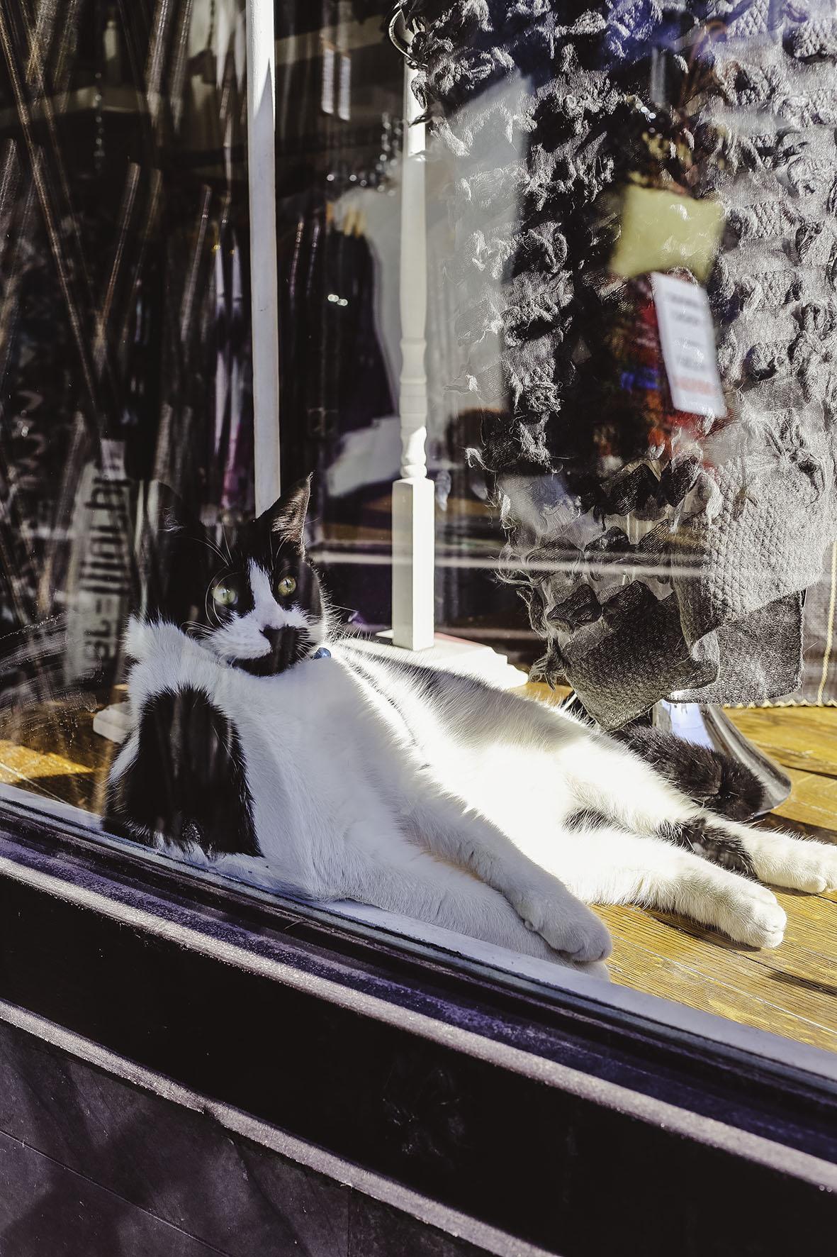 cat 2 small.jpg