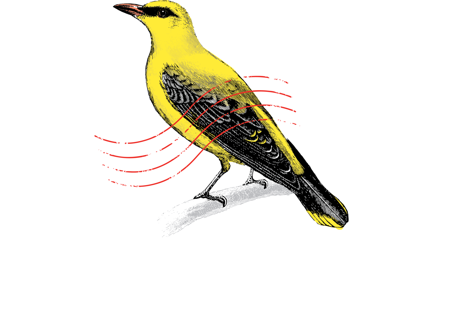 ORIOLE - LONDON -