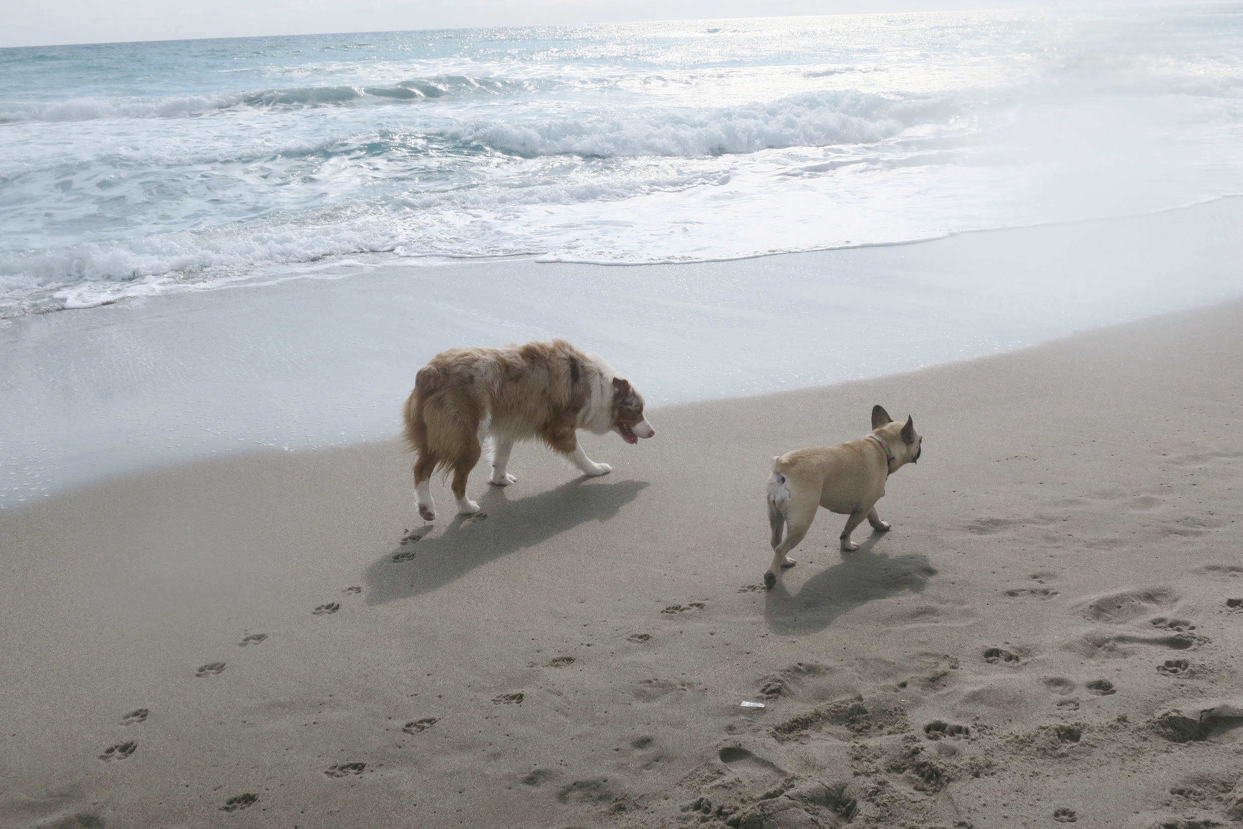 And always lots of new friends to be made at the dog beach