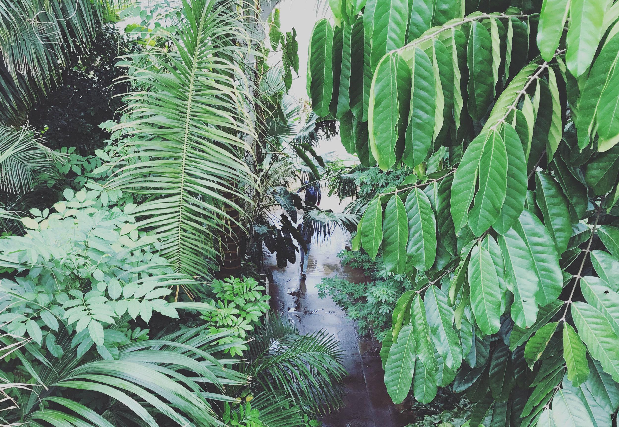 The Palm House - Kew Gardens, London