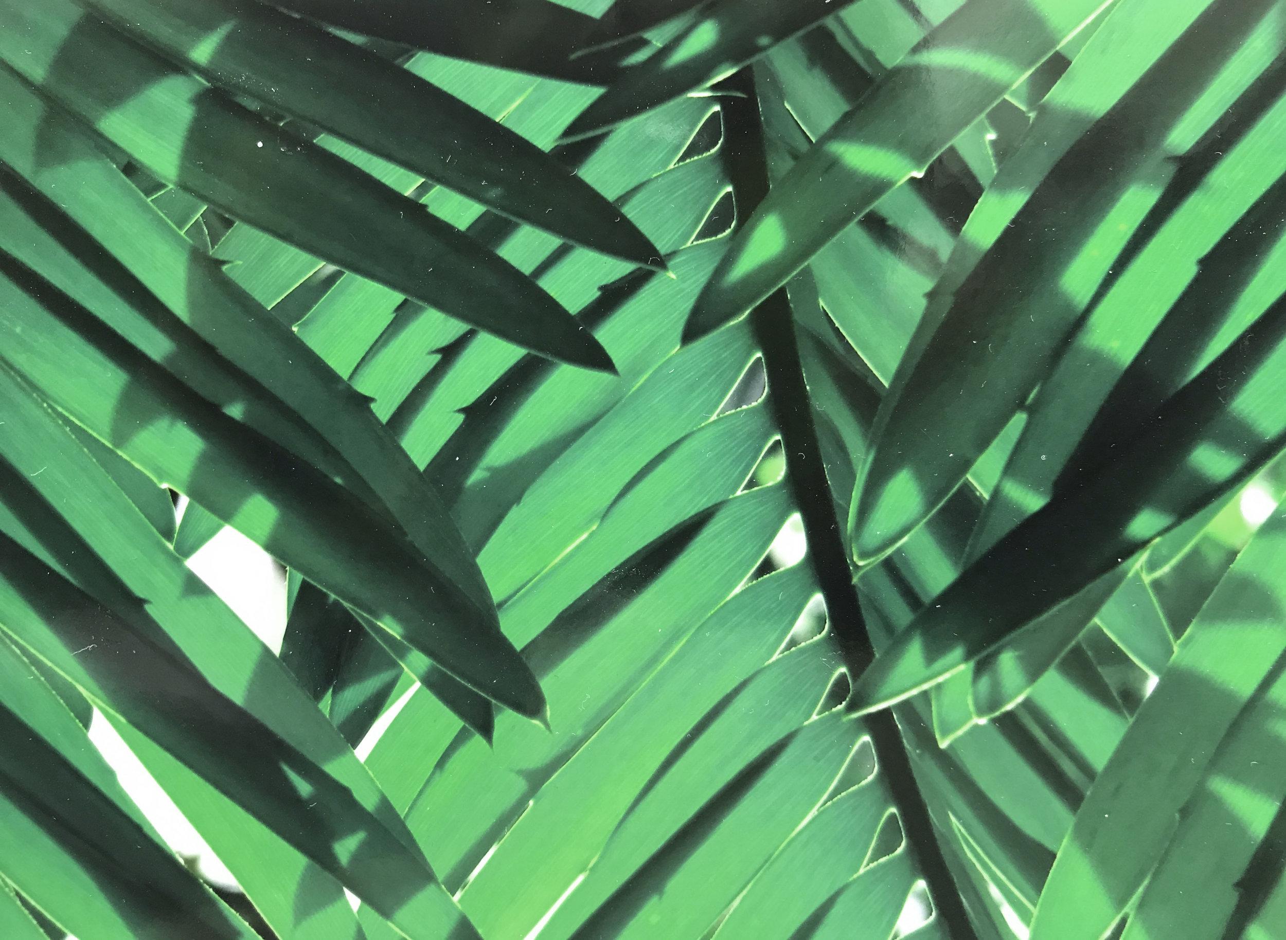 kew_leaves.jpg