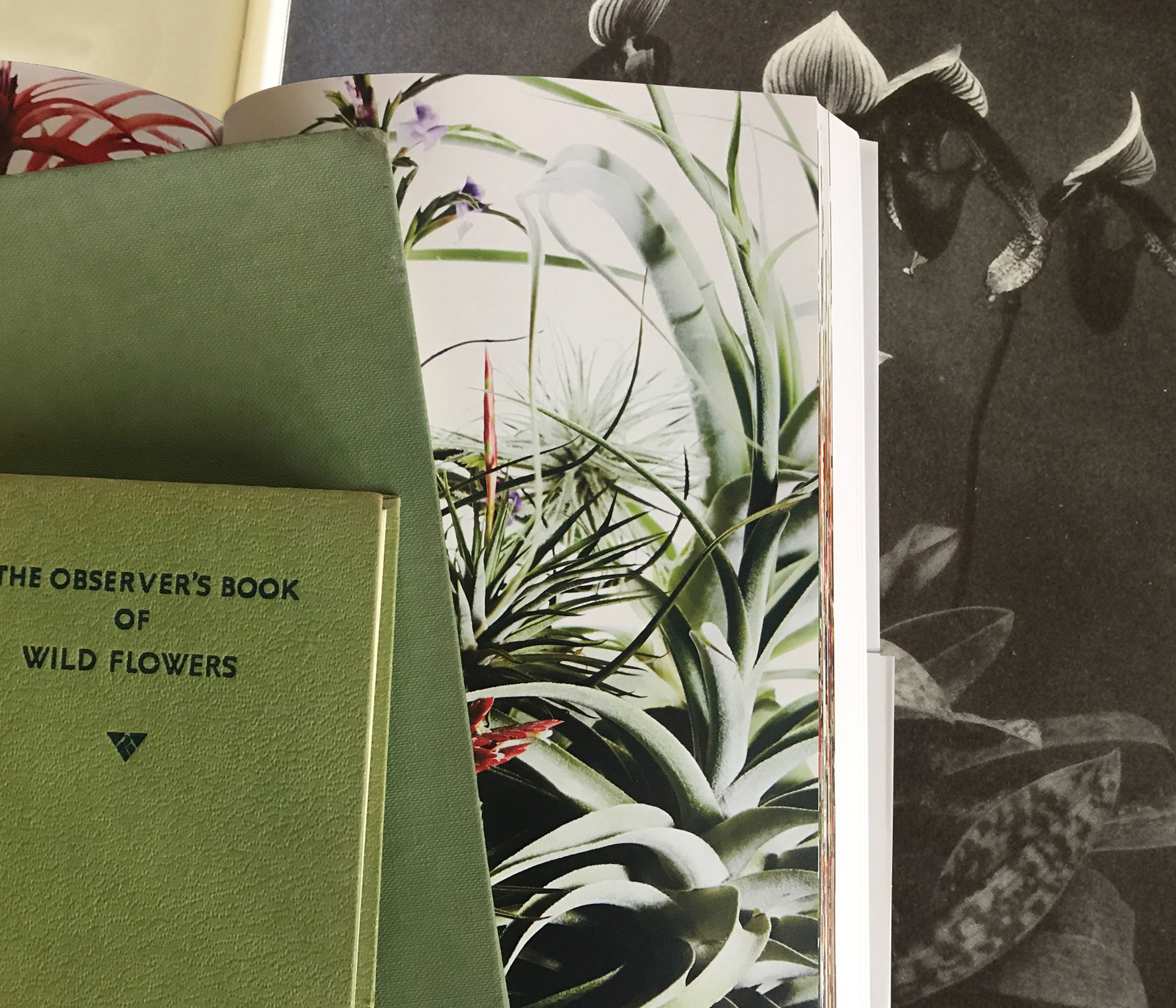 Appointment only, specialist book stores - UK  Offering hundreds of out of print books, filled with inspirational stories, individuals and field sketches, as well as more recent artist interpretations of the natural world.