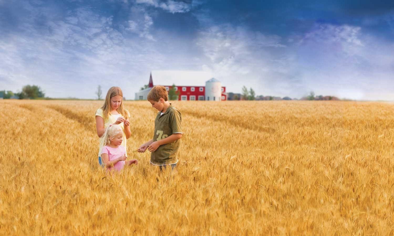 JET15503_bgimage_Wheat-Field_web.jpg