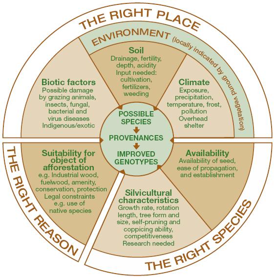 right-tree-right-place-right-reason.jpg