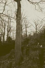 Gavin Munro shooting last year's Scion Wood from the top of a 'plus' sycamore in Herefordshire.