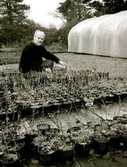 """Harry inspects """"1+1"""" East Anglian oak plants which have been reserved for him."""