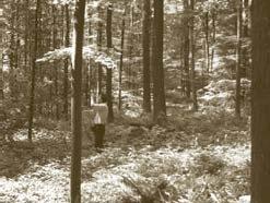 beech-sessile-oak-forest.jpg