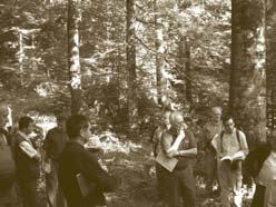 oak-hornbeam-forest.jpg