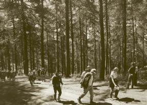Members walking through the Leighton Estate woodlands