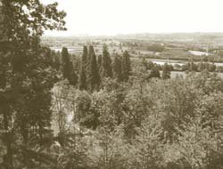 View from The Leighton Estate Woodlands