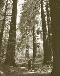 RFS Leighton Redwood Grove