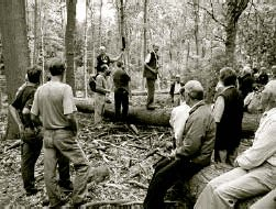 Peter Goodwin and Neil Humphris (standing on log) discuss selective felling of sweet chestnut.