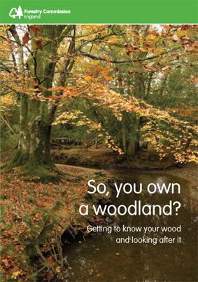 so-you-own-a-woodland.jpg