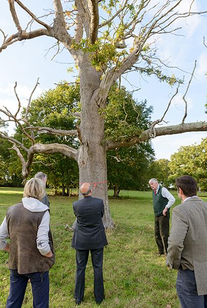 Miles Barne and an AOD oak