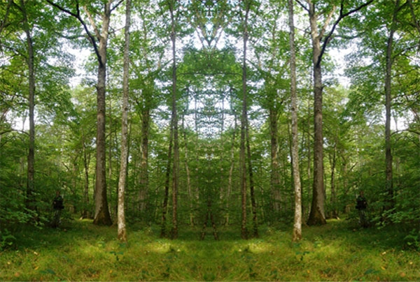 irregular-forest-management-group.jpg