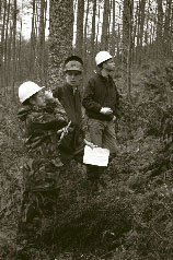 woodland-survey.jpg