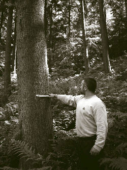 Jon Murray (BSc Forestry student) uses a Biltmore stick to measure diameter on a large Douglas fir, as part of a project on stand dynamics in continous cover forests.