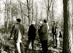Delegates assess tree spacing before marking stems for thinning.