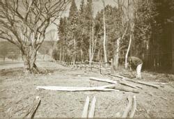 prickly-nut-wood.jpg