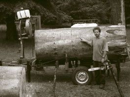 The Pencarrow Beech butt on the Wood-Mizer saw