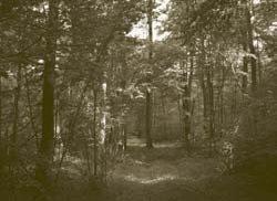 Forêt de Gergy