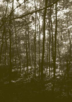 Forêt de Fresnoy