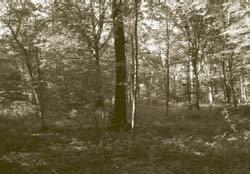 Forêt de Vivey