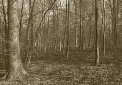 Forêt du Régnaval