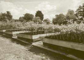 Our Suffolk tree nursery