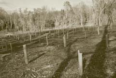 suffolk-planting-project-01.jpg