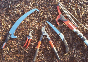 Figure 5 :  Pruning tools - (left to right) saw with undercutting chisel for fitting to telescopic pole,secateurs, loppers, folding pruning saw, lopping head fitted to 6m telescopic pole