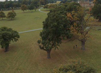 acute-oak-decline-img-01.jpg