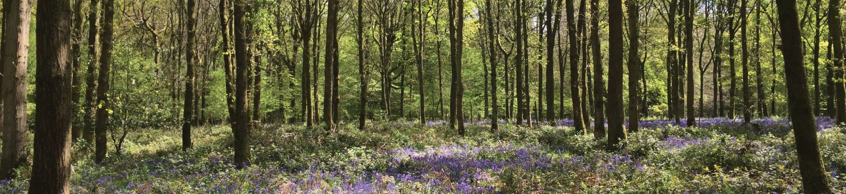 Get involved - and learn more about our wild service tree activities