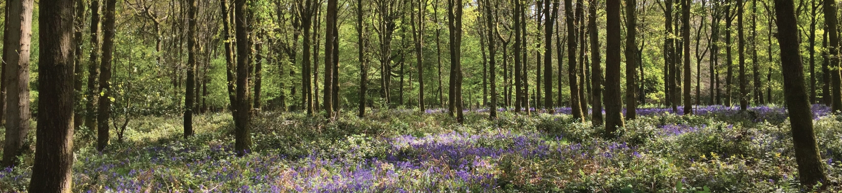 Join Woodland Heritage - discover the benefits of becoming an individual or corporate member
