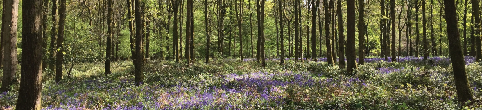 Join Woodland Heritage - and help support sustainable tree growing for future generations