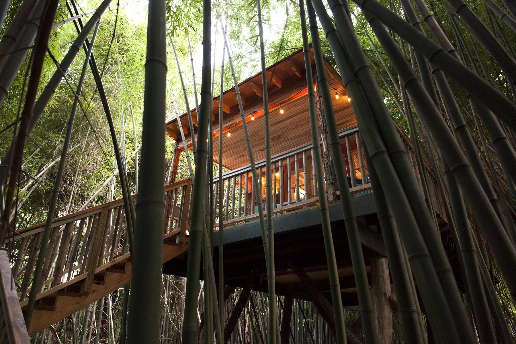LindsayAppel-Treehouse-8