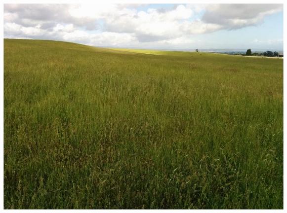 MeadowSun.jpg