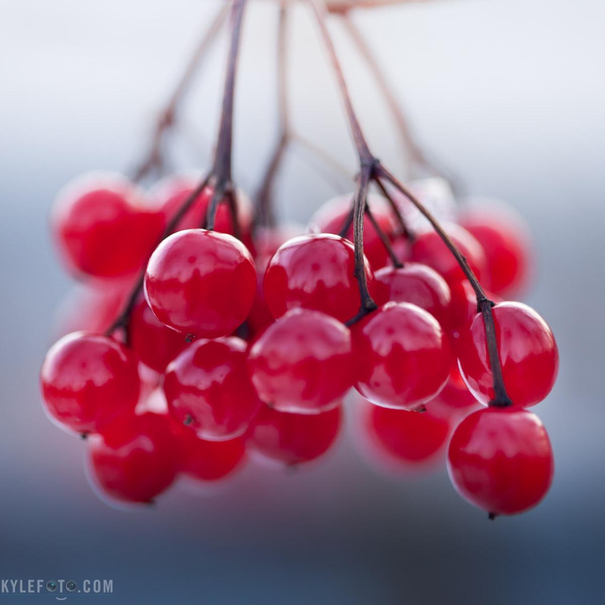 berries-1.jpg