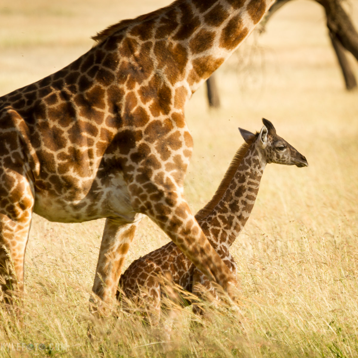giraffe-and-mom.jpg