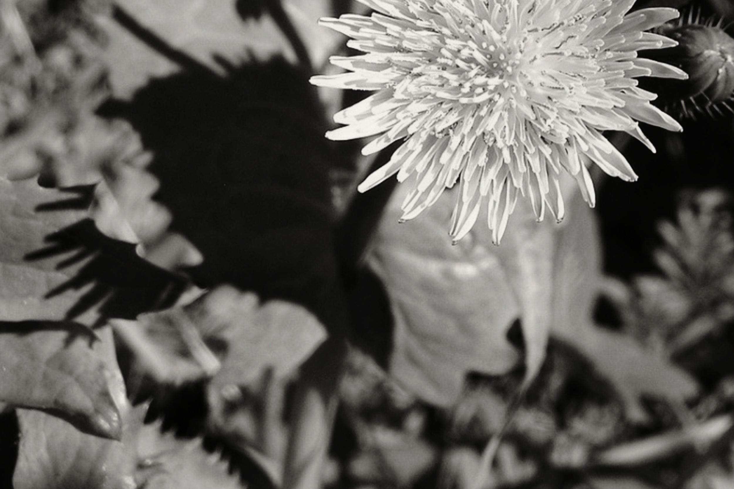 Weed Control andFERTILIZATION -